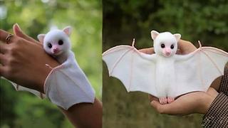Самые Милые Экзотические Животные, Которые вы Захотите Завести