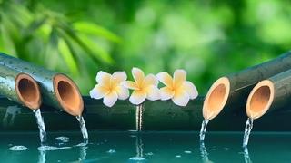 [Si Escucha 5 Min] Relájate Con Los Sonidos Del Agua, Poder del Cerebro, Estimular la Creatividad