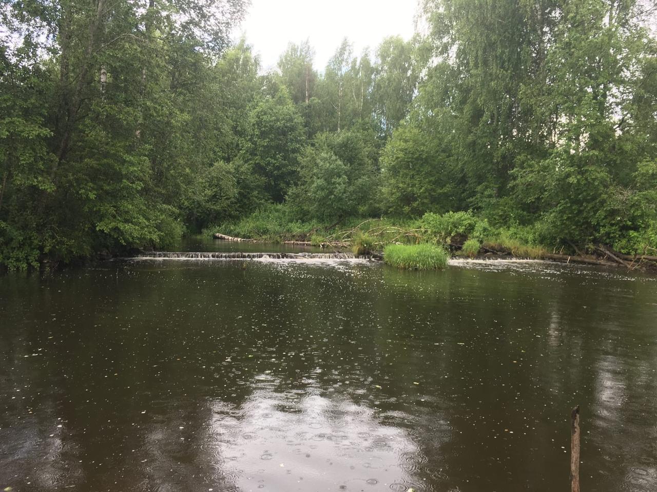 брёвна, перегораживающие реку