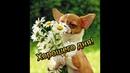 Хорошего дня! Прекрасная музыкальная открытка. / Have a nice day! / Гарного дня!