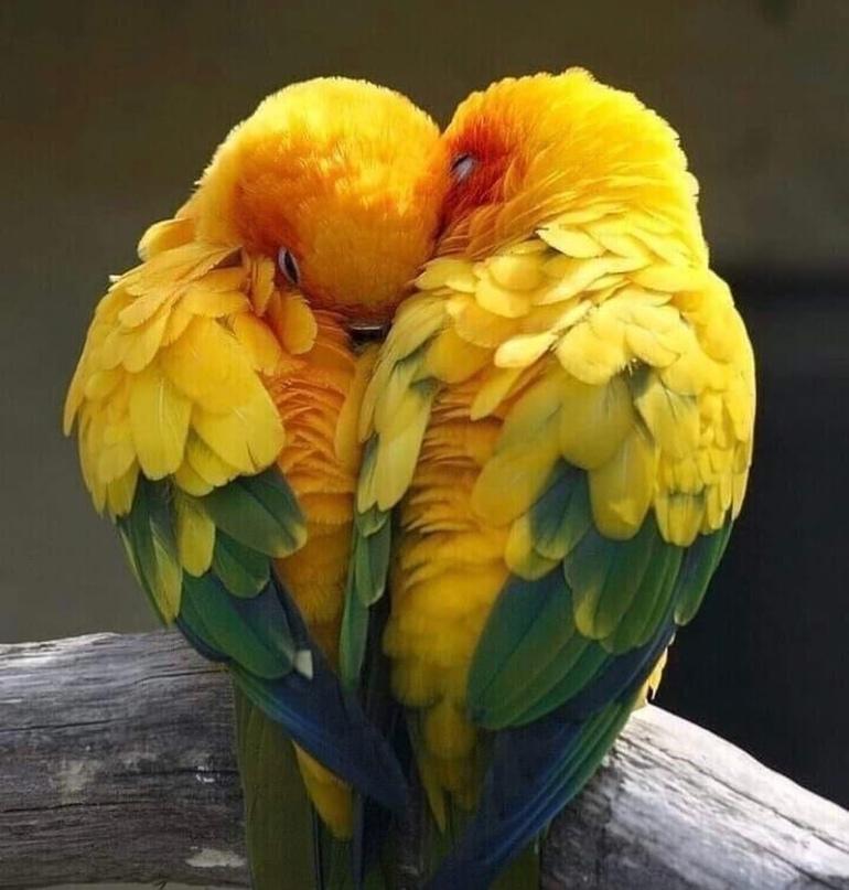 ИСТОРИЯ ОДНОЙ ЛЮБВИ... 🕊️🕊️🕊️