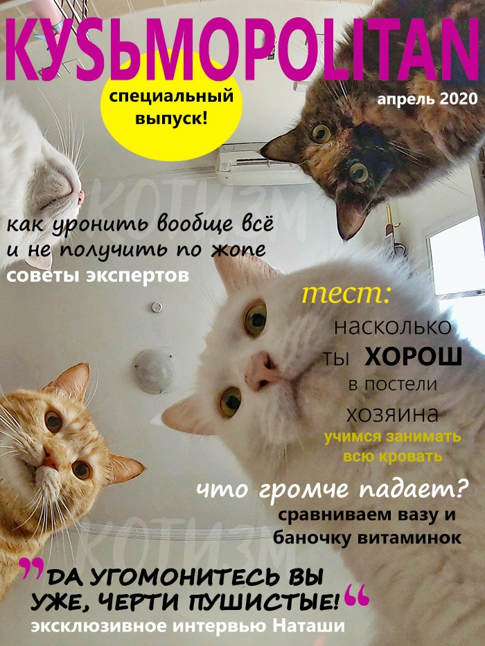 Журнал, который втайне выписывает твой кот
