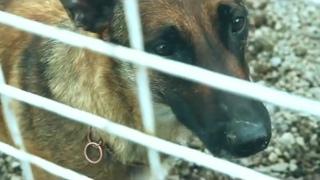 Очень трогательный ролик про собачью любовь и преданность