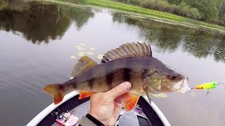 Рыбалка на ПОППЕР / ловля щуки и крупного окуня на спиннинг / Рыбалка на Днепре