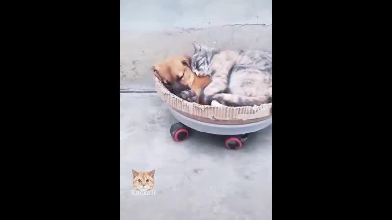 Давай спать вместе