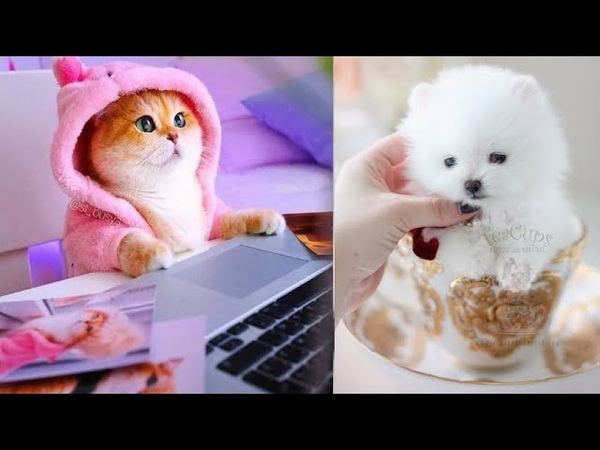 Super cute kittens Worlds most Cute and Funny Kittens Episode 5