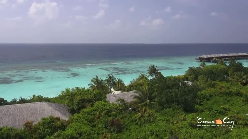 Ocean Cay MSC Marine Reserve Bahamas private island dream