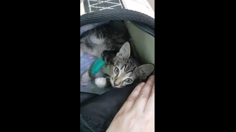 Бездомный котик Гектор Катаемся по больничкам после укуса собаки Вздутие лобной доли Август 2020г