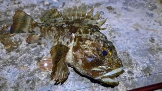 Ловля скорпены на ультралайт. Рыбалка на Черном море. Жор и трофеи!