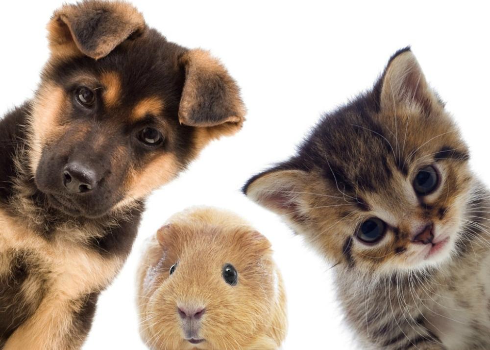 доставляет достаточно картинки животных для визитки сложенная печь является