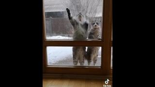 Коты и кошки нагулялись. Что их ждет дома?  Смотрим видео про кошек. Приколы с котами