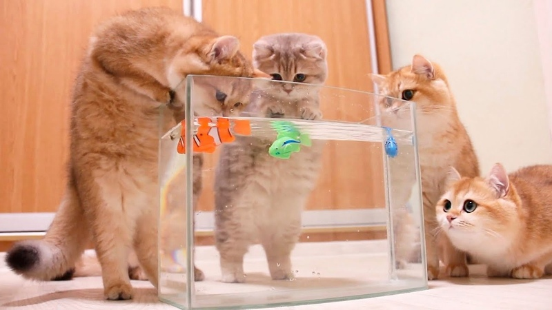 Kittens and Cats learn Сatches FISH. Too funny Too cute