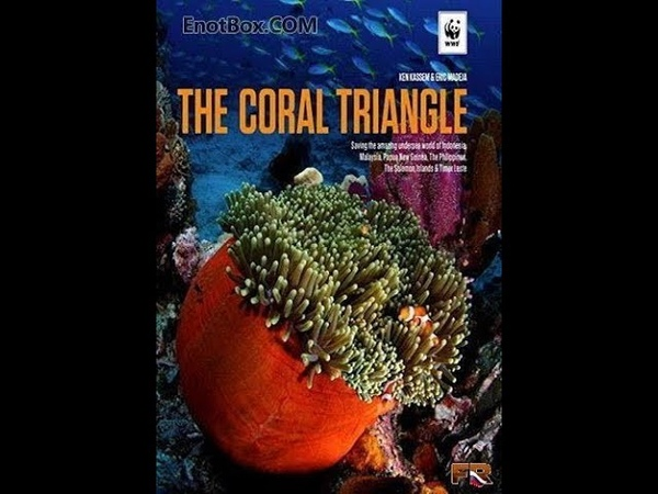Великие тайны Кораллового треугольника часть 3
