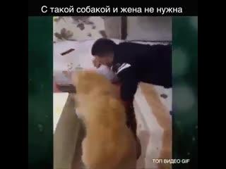 C такой собакой и жена не нужна )))