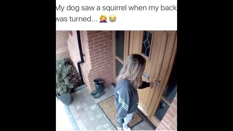 Dog saw a squirrel