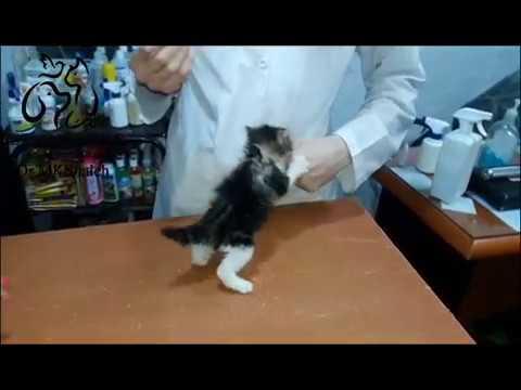 Tiny angry cat at vet clinic смотреть онлайн без регистрации