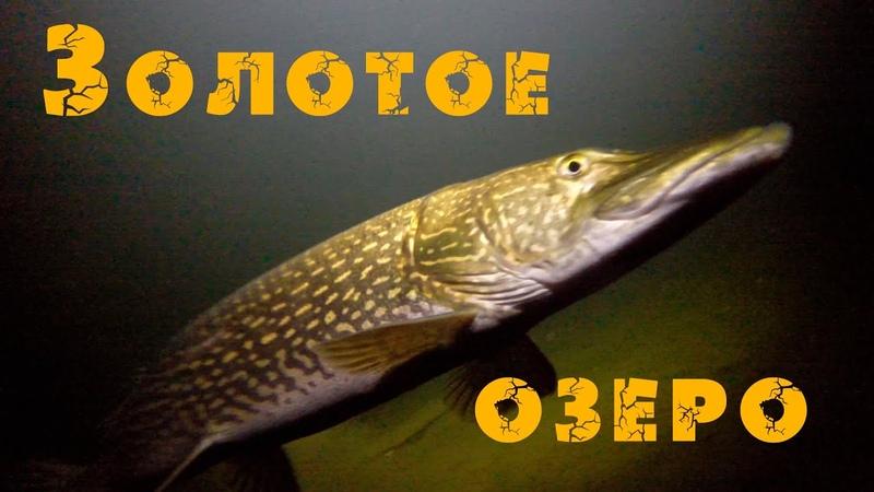 Золотое озеро Телецкое Алтай Altai Golden lake Teletskoye Сибирь Дикая природа Алтая Siberia
