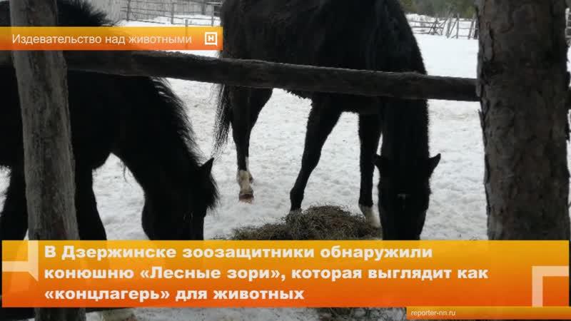 В Дзержинске зоозащитники обнаружили конюшню «Лесные зори», которая выглядит как «концлагерь» для животных