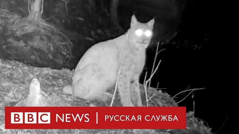 Звери Чернобыля Редкие кадры обитателей зоны отчуждения