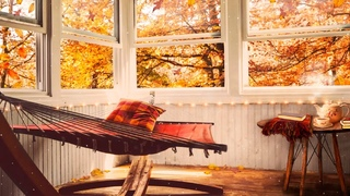 COZY Autumn Ambience:  relaxing reading room, gentle falling leaves, tea, birds, neighborhood sounds