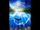 Азорские острова Акулы, киты, манты, скаты