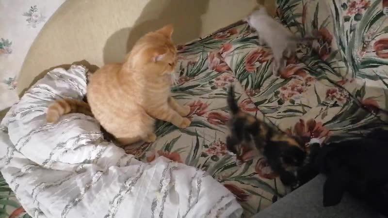 Котята с Громова 2
