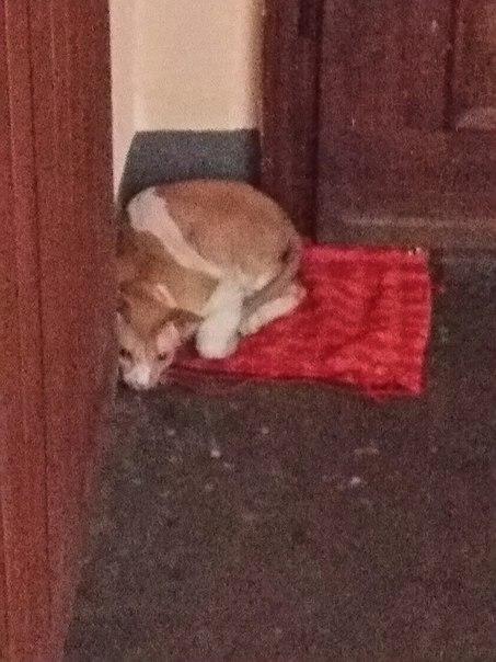 трудно отыскать если кот убежал из квартиры билеты поезд Харьков