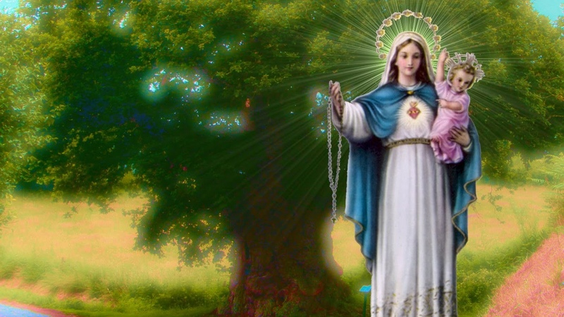 Un chêne mystérieux consacré à la Vierge Marie