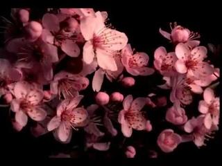 П И Чайковский   'Вальс цветов'  из балета 'Щелкунчик'