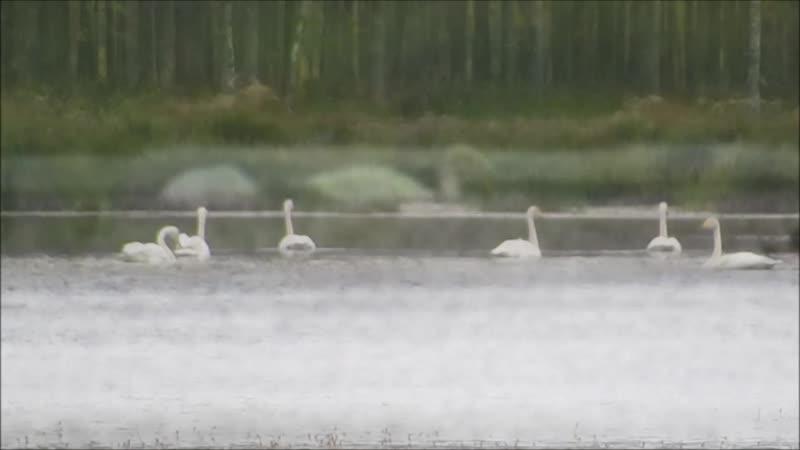 Лебединое озеро Вытегорский район