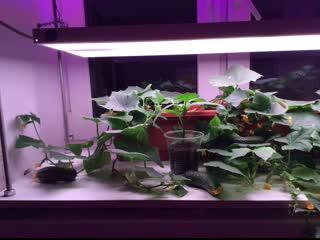 Как выбрать фитосветильник для домашнего огорода и организовать размещение растений
