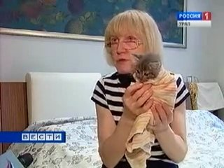 История котёнка Мышкина