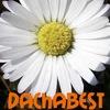 DachaBest