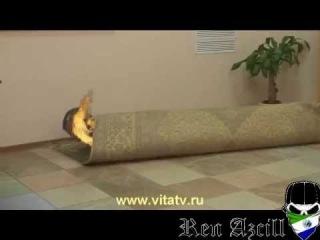 Доктор Попов сгорел | RYTP