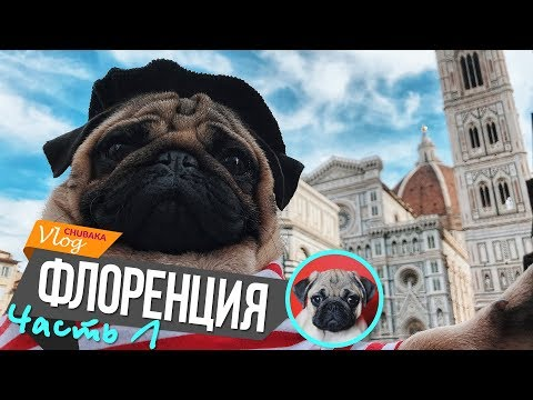 Флоренция / Глебкин сюрприз / Чубака в апартаментах 14 века / Chubaka Vlog!