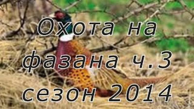 Охота на фазана с легавыми дратхаарами на Юге России Сезон 2014г Ч 3
