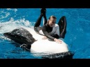SeaWorld Trainers in the Water with Killer Whales (The Complete 2009 Shamu Believe Show)