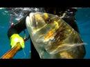 Pescasub Top 10 Il meglio del 2014