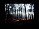 Gris - Il Etait Une Forêt ( Lyrics)