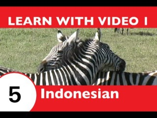 Learn Indonesian with Video -- How to Talk About Safari Animals in Indonesian