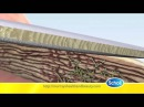 Антигрибковое средство по уходу за ногами Scholl Fungal Nail Treatment Kill Anti nail fungus (Шоль)