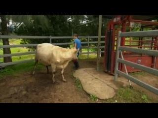 Деревенские ветеринары эп 5