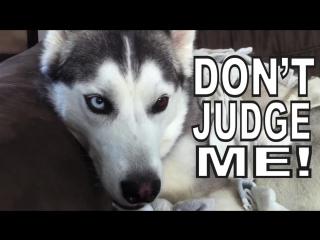 Dogs like socks by psychostick [official] im a dog and i like socks