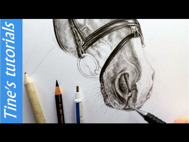 Drawing tutorial How to draw a horse muzzle nose Leontine van vliet