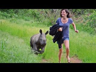 'Nandi' Orphaned Rhino Baby given a Bright  Future