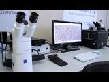 SIAMS 800 - Микроскоп AXIO VERT.A1 MAT с комплектом моторизации производства ООО СИАМС
