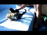 Кот любит, когда его пылесосят