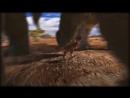 Будни доледникового периода Мультик про динозавров