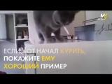 Как отучить кота от курения_