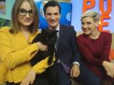 Моя сестричка снова в кадре.... Ветеринар Алена Краснощек- черные коты более ласковые и нежные